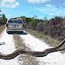 شاهد... شابان يمسكان ثعبان ضخم جداً بولاية فلوريدا وهذا ما حصلا عليه مقابل إمساكهم بهذا الثعبان الضخم