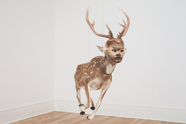 ちょっと不気味なアート?人面の生き物の標本アート【a】