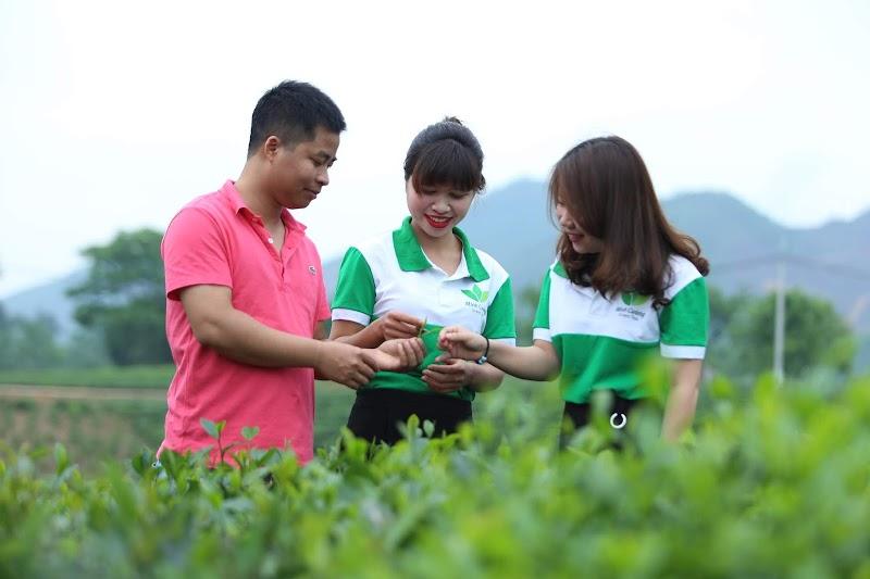 Trà sạch Thái Nguyên