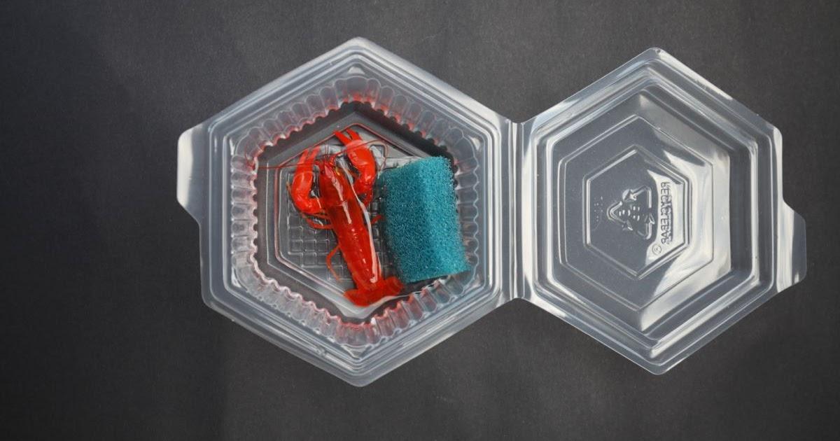 nano aquarium f r anf nger flusskrebse sicher versenden. Black Bedroom Furniture Sets. Home Design Ideas