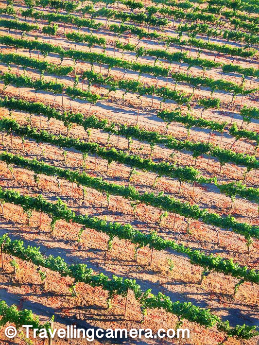 I loved these patterns of grape farms in Thomas Fogarty Winery & Vineyards. More than that the grandness of the place and how carefully these plants are grown in this huge land around the hills. Maintaining these farms on hills is not simpler. During the tour I also learned that good sun light is one of the important factor to get good crop and at times, folks have to wait for months to pluck the fruits from these plants.      Related Post - Barbecue party around States beach in Half Moon Bay, California