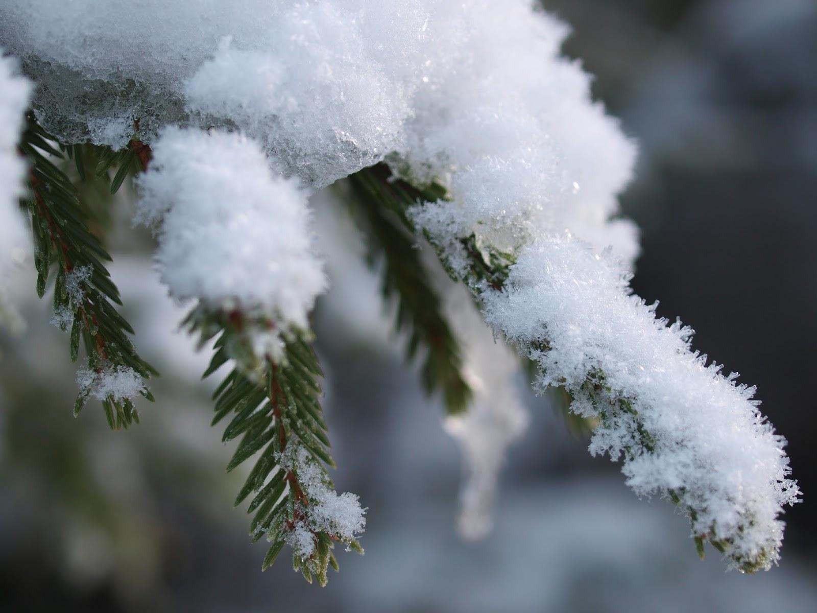 kesämökki, vesilahti, kuusi, lumi, talvi, suomen luonto