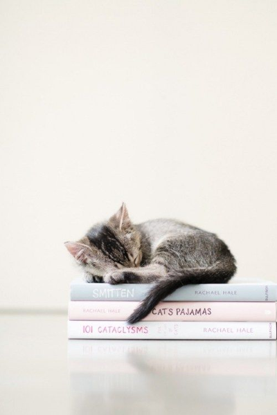 Photographie de chaton sur Pinterest
