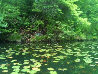 Beech Mountain Lake, Drums PA