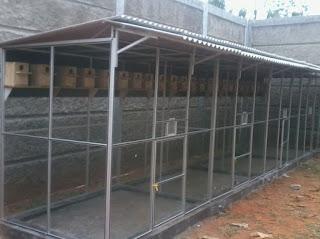 Pembuatan Kandang Ternak Burung Kacer