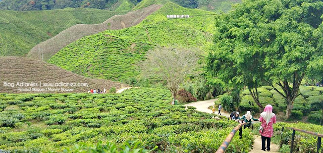 Holiday Cameron Highlands | Cameron Valley Tea House 1