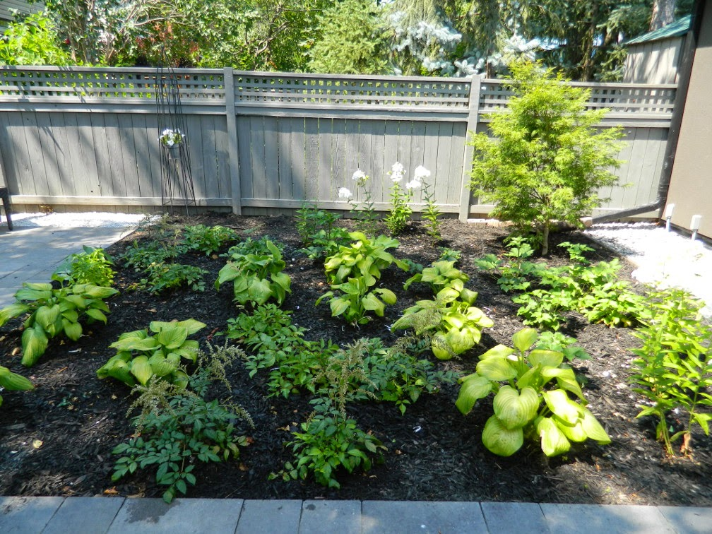 the danforth garden design after by Paul Jung Gardening Services Toronto