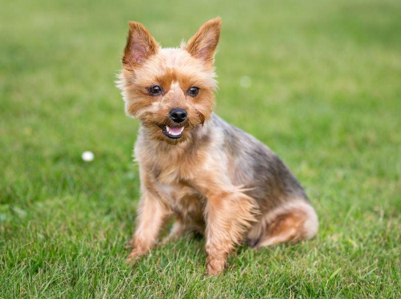 Low Maintenance Dog Breeds