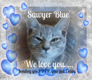 Sawyer Blue