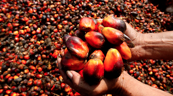 How to Start a Palm Oil Production Business in Nigeria