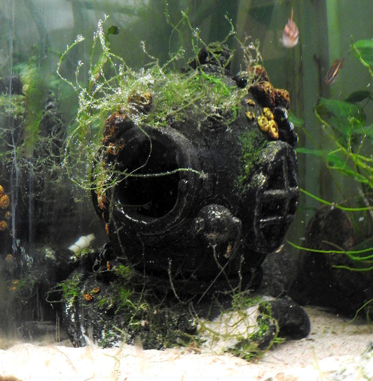 akvaarion sisustuksena sukeltajan kypärä