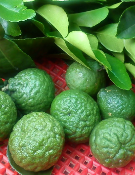 Kaffir lime natural treatment for dandruff