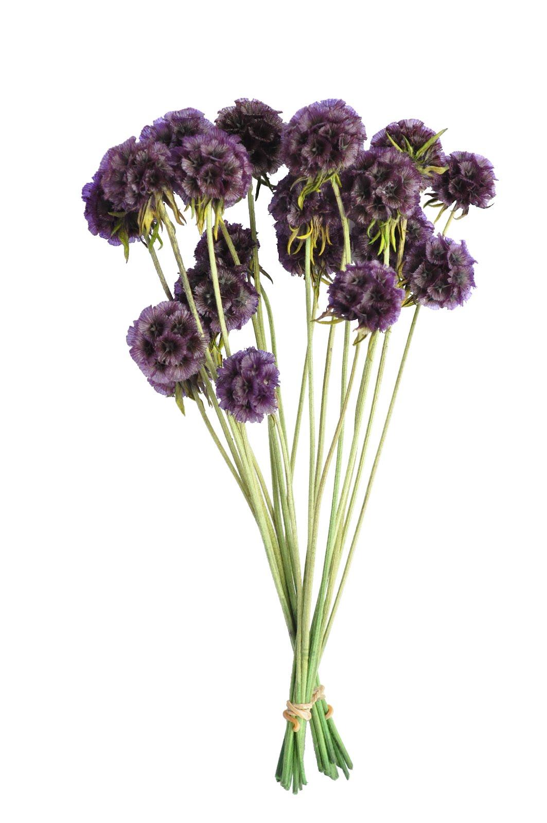 東波水月花坊: AN11005 不凋花果實 紫色松蟲草果