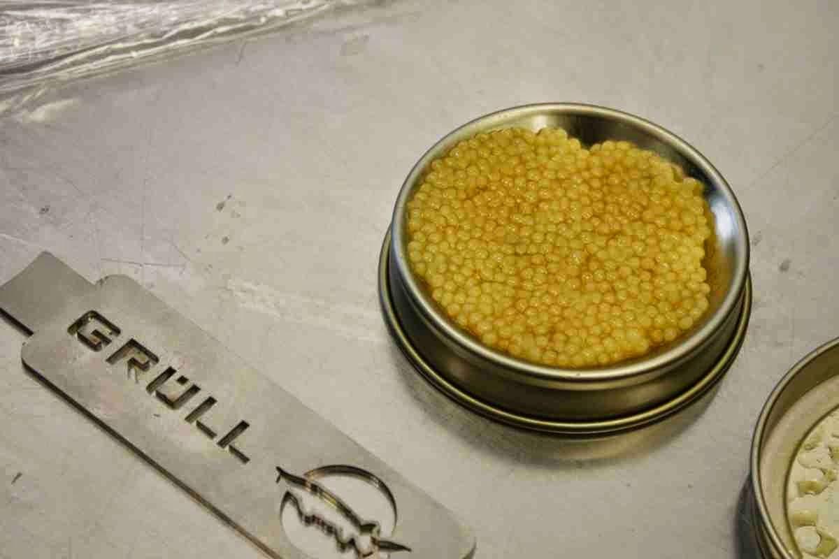 Das Highlight - weißer Kaviar