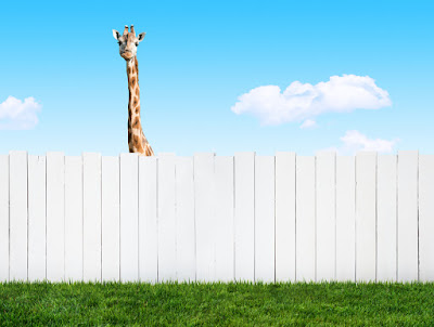 photo of a giraffe looking over a fence