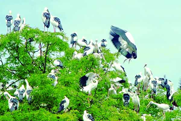 Birds-of-Bangladesh