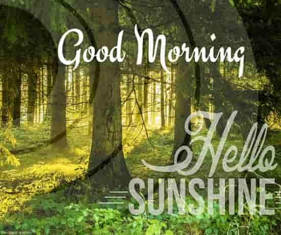 hello sunshine good morning