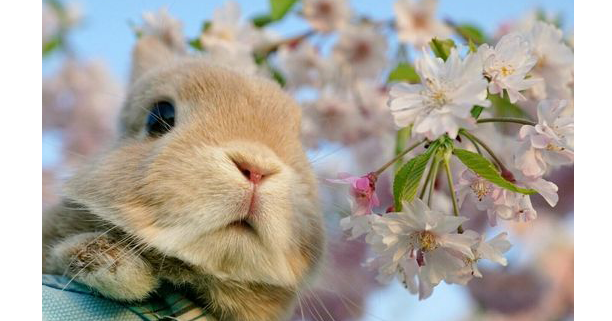 Why Rabbits Do Not Make Great Starter Pets Are You Suitable For A Rabbit The Pets Dialogue