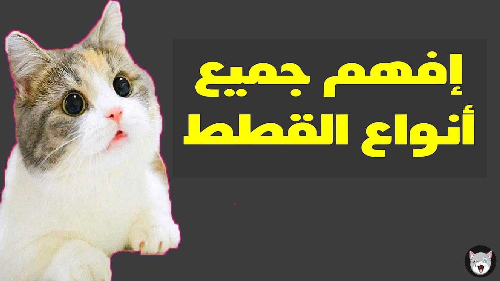 تعلم لغة القطط من خلال فهم أصواتها