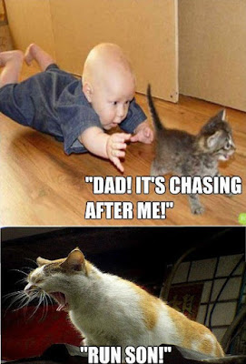 Kid chasing a cat