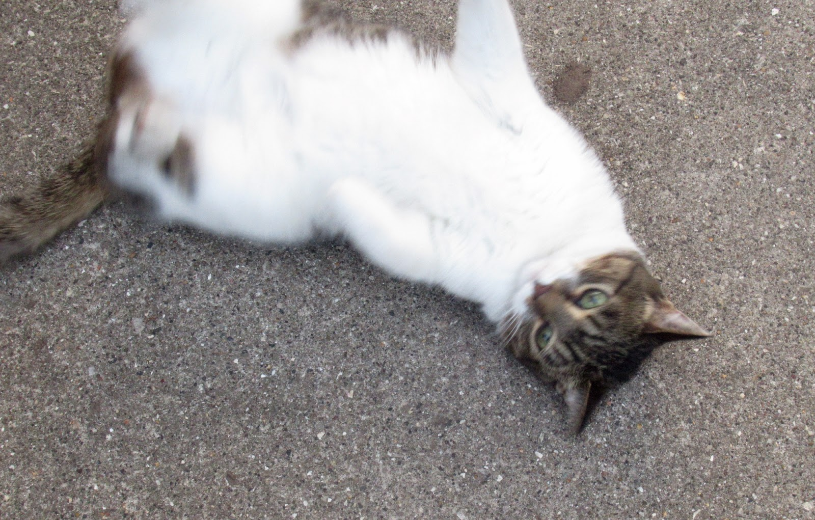 stray cats in the neighborhood