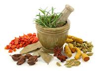 khasiat daun binahong untuk mengobati penyakit darah tinggi