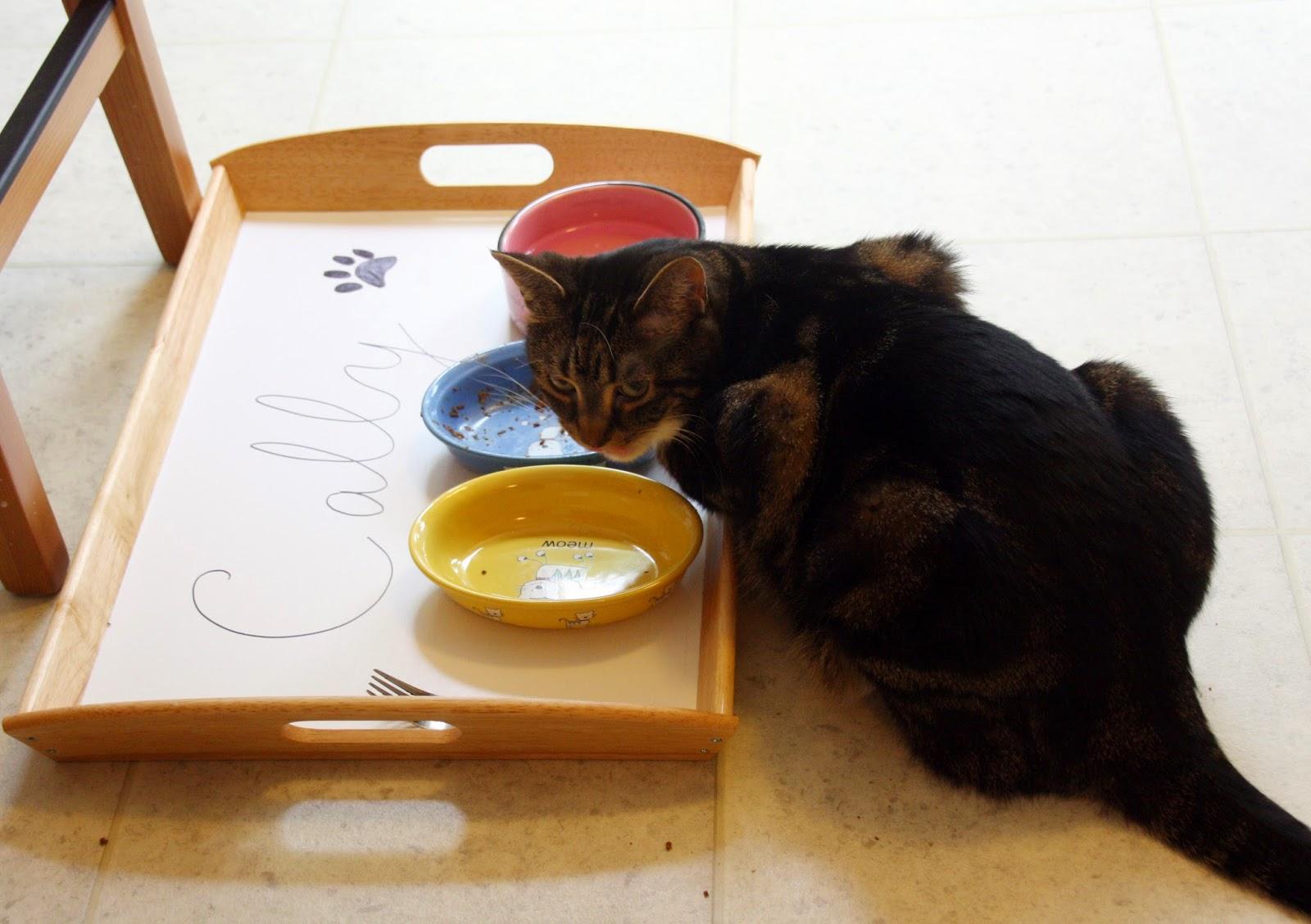 Cat feeding station with IKEA tray