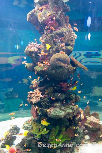 kayıp balık Nemo benzeri renkli palyaço balıklarının yüzdüğü bir mercan resifi, Sea Life Akvaryum İstanbul