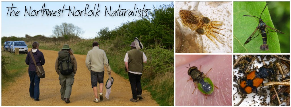 Northwest Norfolk Naturalists