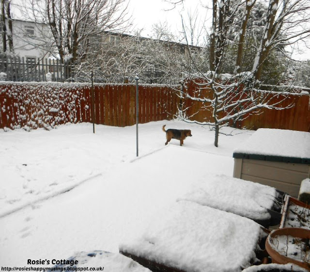 Our furbaby Jade had such fun investigating her garden in the snow.