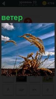 На небе быстро проплывают облака и трава гнется под напором сильного ветра