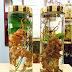 Uống rượu sâm Ngọc Linh có tốt không? đối tượng nào thì nên dùng?