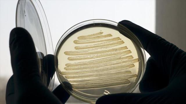 Bacterias multirresistentes causan 33 000 muertes al año en Europa