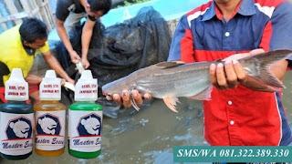 Essen Untuk Umpan Ikan Patin Kilo Gebrus