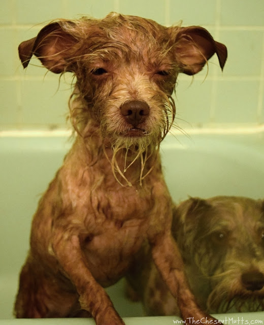 Bailey and BVH Pet Care Premium Dog Shampoo & Conditioner
