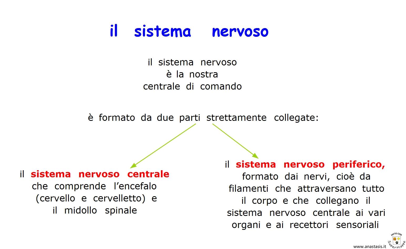Paradiso Delle Mappe: Il Sistema Nervoso