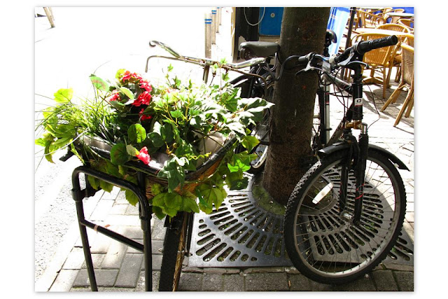 flower pot and a bicycle
