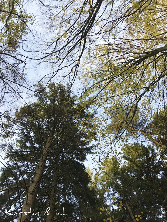 Wald Hunsrück