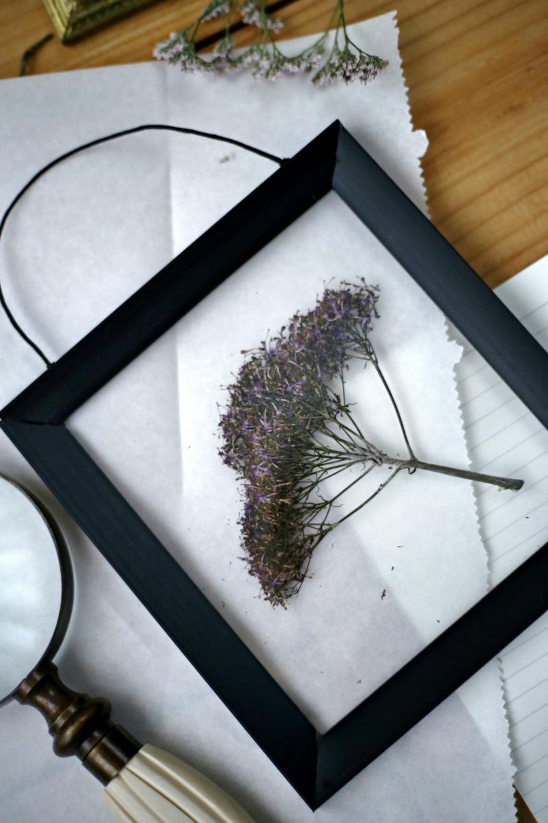 Marco de fondo transparente para flor prensada diy - Como hacer un marco para un cuadro ...