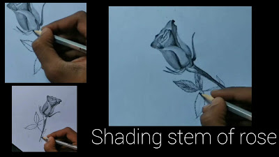 How to set Rose stem, step by step to draw a rose drawing ,how to draw Rose,how to draw Rose step by step tutorial beginners, drawing for beginners, Rose pencil drawing