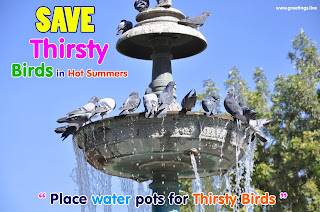 Place water pots for thirsty birds,Save Thirsty Birds in Hot Summers