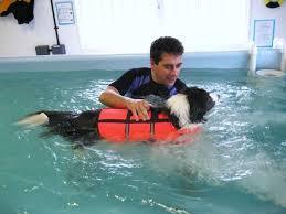 displasia em cães fisioterapia