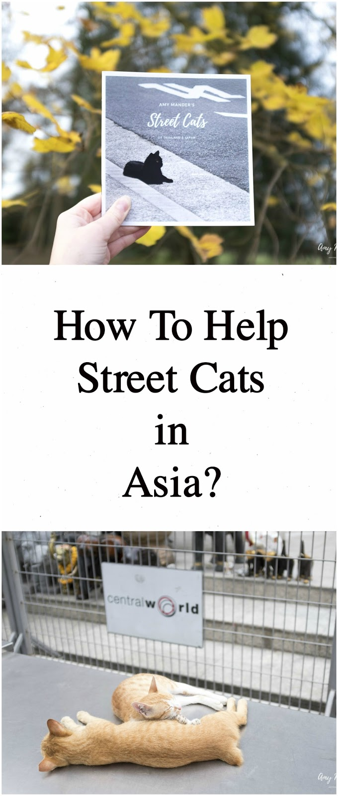 how to help street cats in asia