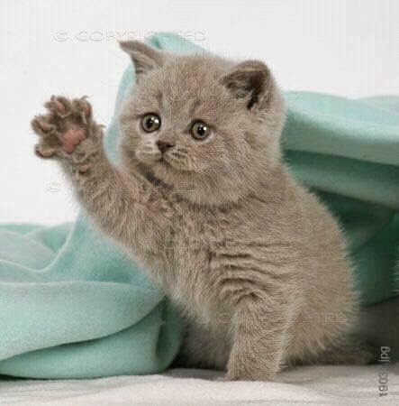 التسمم لدى القطط واسعافاته الاوليه