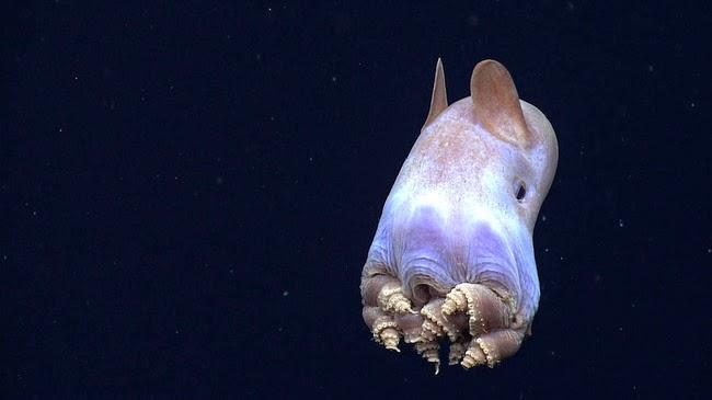 Hewan-Hewan Laut yang Unik Di Dunia Hewan-Hewan Laut yang Unik Di Dunia 61