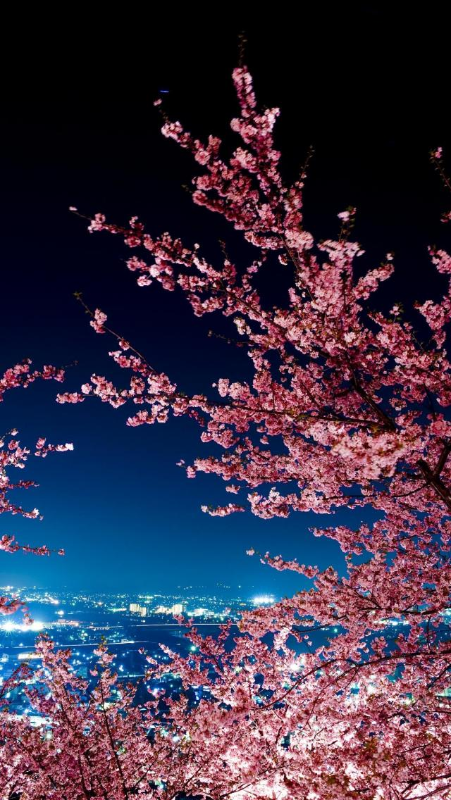 Cherry Blossom IPhone Wallpapers