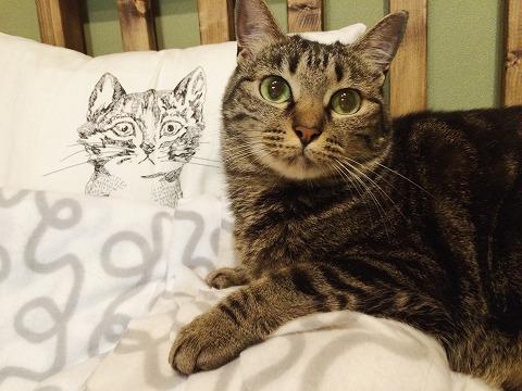 キジトラ猫と、クッションカバーの猫