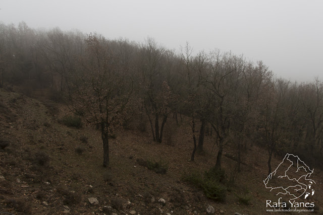 Ruta: Turó de Bellver (1.045 m). Un pico entre niebla.(Els 100 Cims)