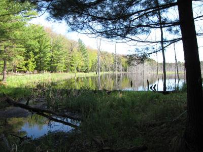 wetland pond