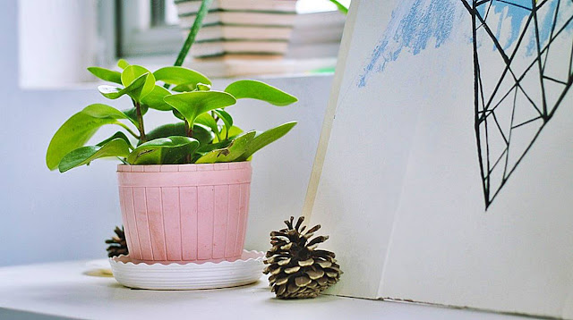 Benefit-Of-Having-Plants-In-Your-Bedroom-And-Office